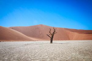 Dead tree in Sussusvlei desert.